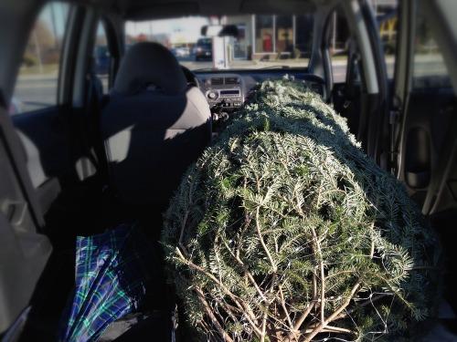 Tree_car